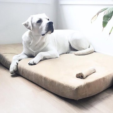 5 Tips for Choosing the Perfect Pet Bed
