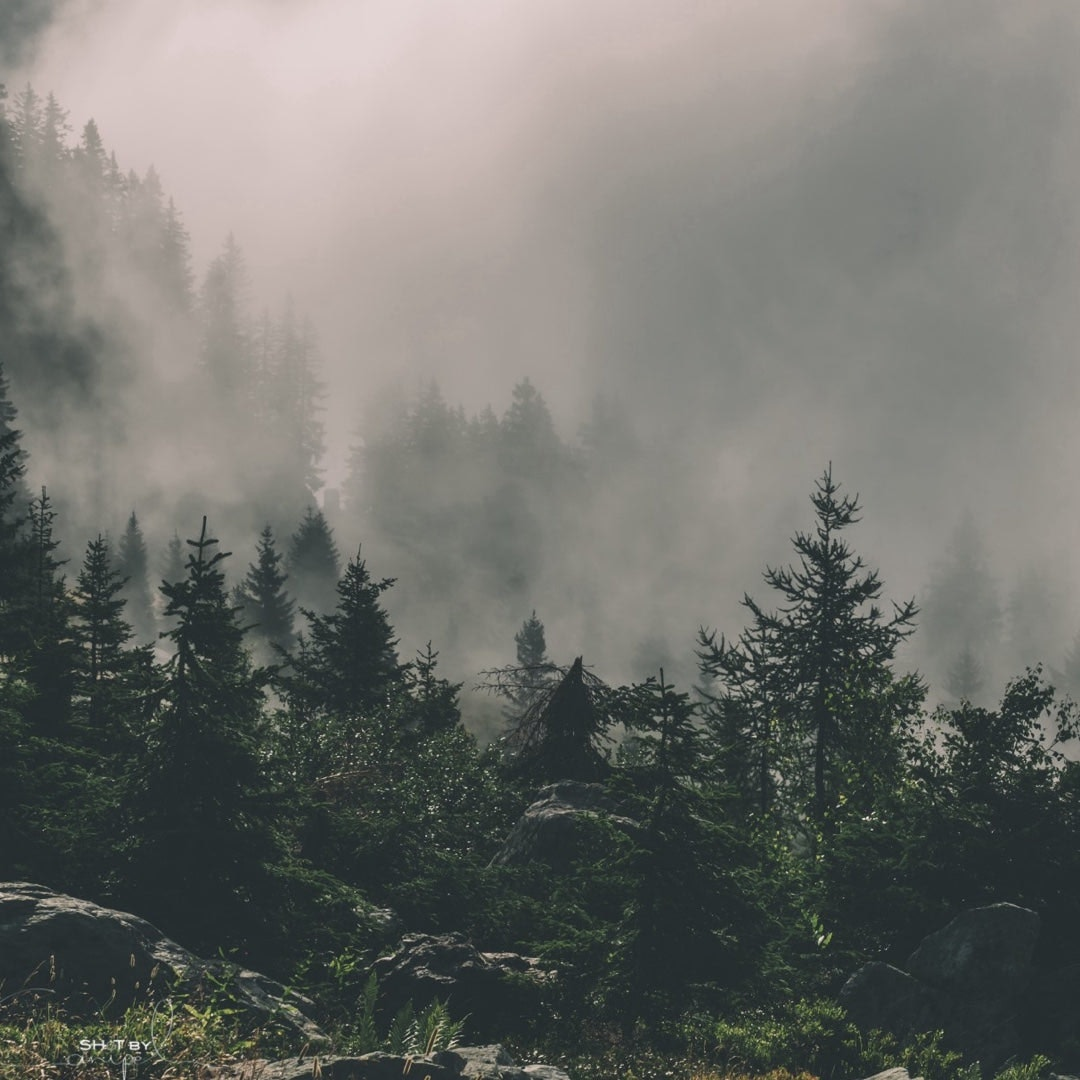 五种方式来支持你的国家森林