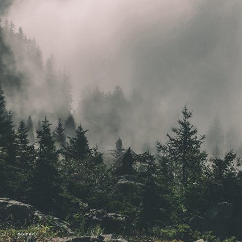 支持国家森林的五种方法