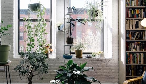 Invite Nature Indoors
